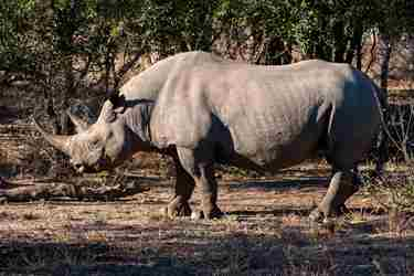 13BlackRhino-south-africa-client-review-yellow-zebra-safaris.jpg