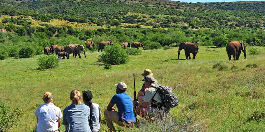 shamwari bayethe lodge south africa elephant walk yellow zebra safaris