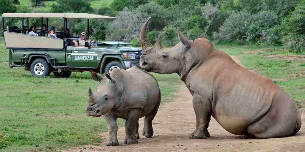 shamwari bayethe lodge south africa game drive rhino yellow zebra safaris