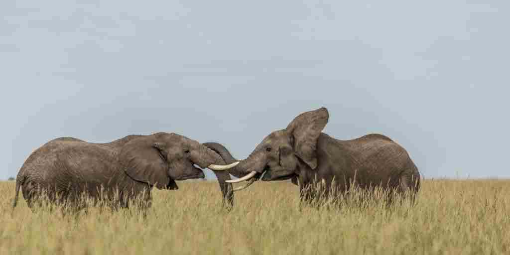 angama-mara-elephants-kenya-yellow-zebra-safaris.jpg