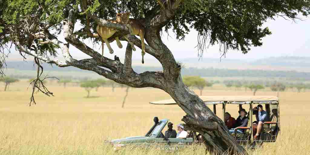 angama-mara-game-drive-kenya-yellow-zebra-safaris.jpg