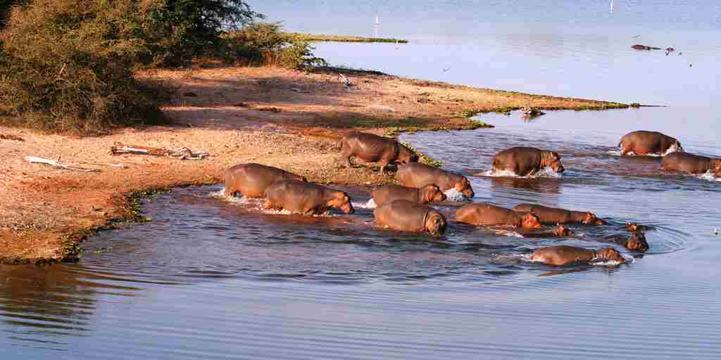 changa-safari-camp-hippos-zimbabwe-yellow-zebra-safaris.jpg
