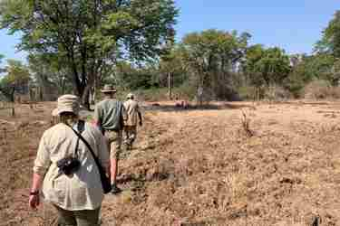 walking-at-mapazi-camp-south-luangwa-zambia-yellow-zebra-safaris.JPEG