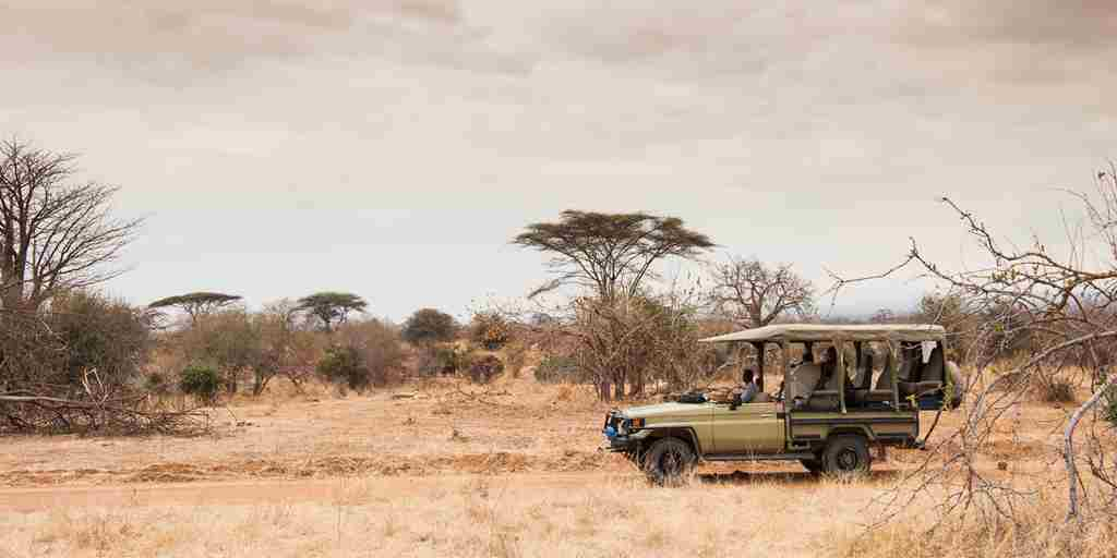 kwihala game drive tanzania yellow zebra safaris