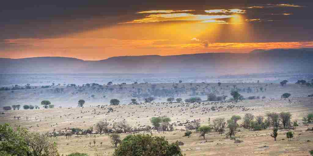 legendary serengeti camp view tanzania yellow zebra safaris