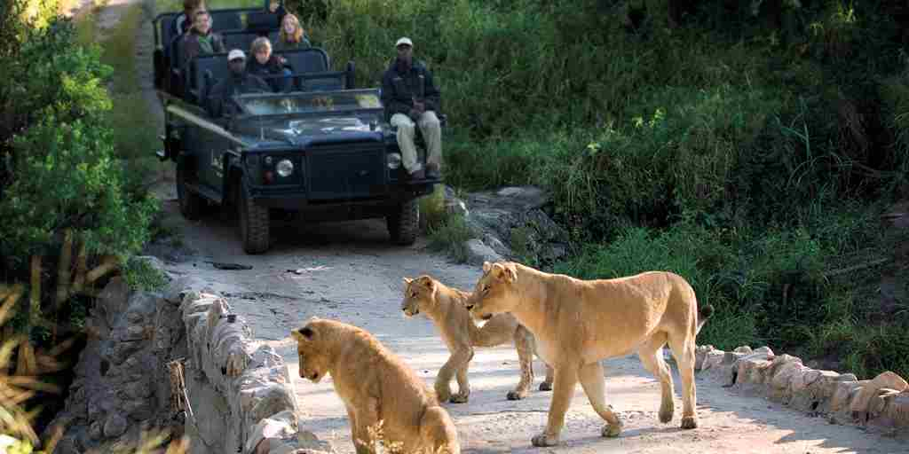 lion-sands-tinga-lodge-game-drive-south-africa-yellow-zebra-safaris.jpg