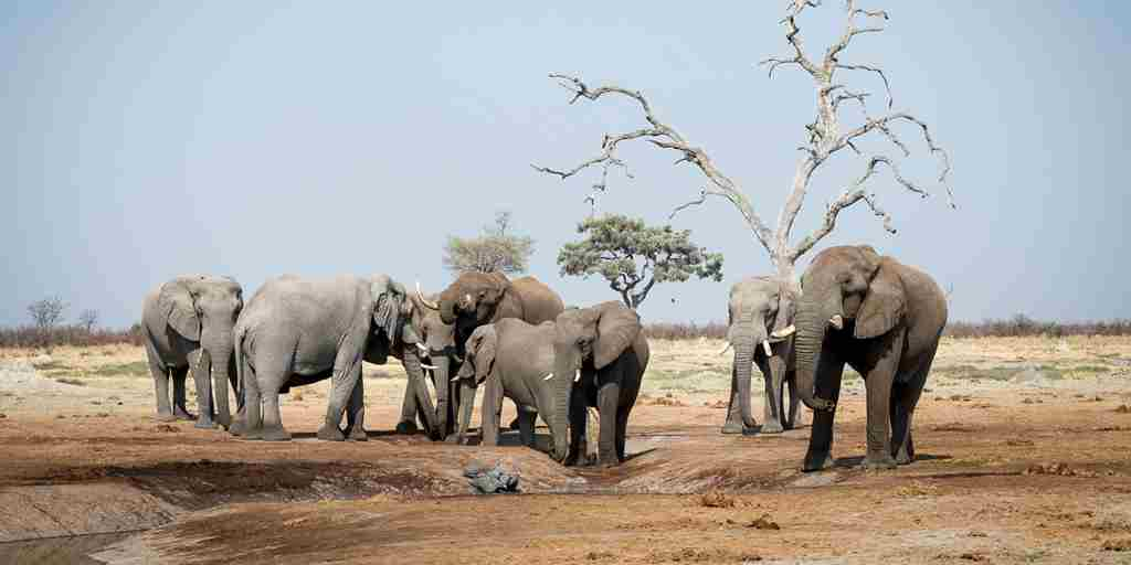 savute-elephants-botswana-yellow-zebra-safaris.jpg