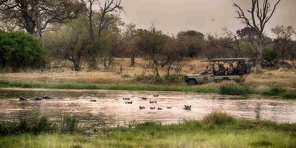 golden-africa-safaris-game-drive-botswana-yellow-zebra-safaris.jpg