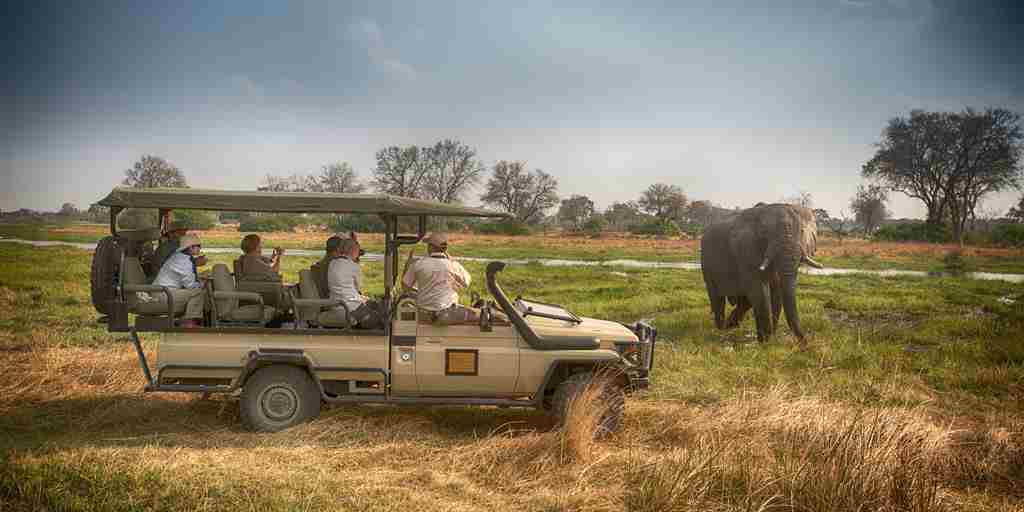 golden-africa-safaris-game-drive-elephant-botswana-yellow-zebra-safaris.jpg