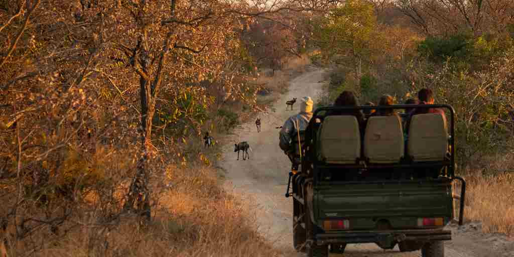 seseka-tented-camp-game-drive-south-africa-yellow-zebra-safaris.jpg