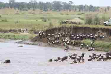 13-river-crossing-client-review-clark-couples-safari-tanzania.jpeg