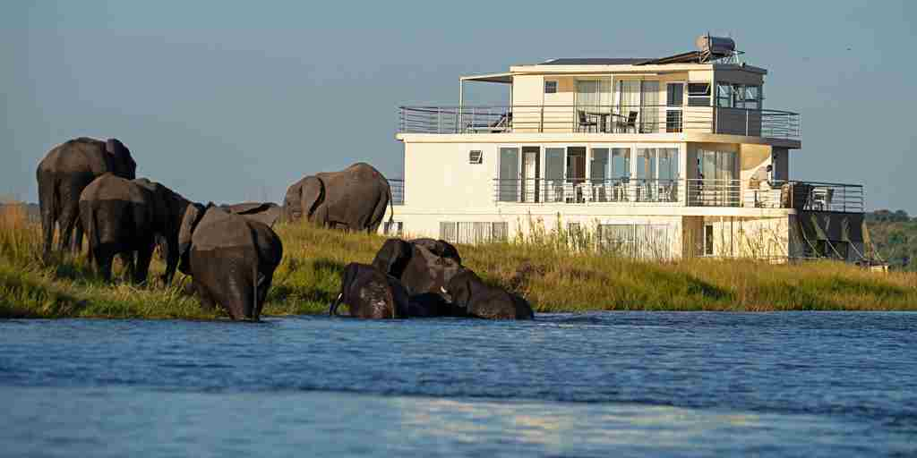 Chobe-princess-botswana-elephants-yellow-zebra-safaris.jpg