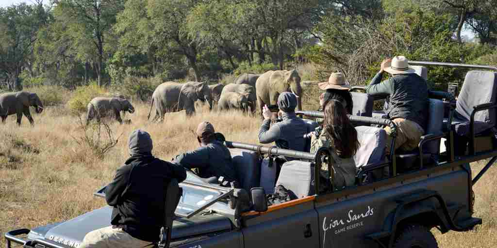 lion-sands-ivory-lodge-game-drive-south-africa-yellow-zebra-safaris.jpg