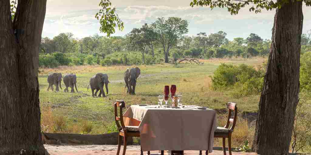 selinda explorers camp bush dinner botswana yellow zebra safaris