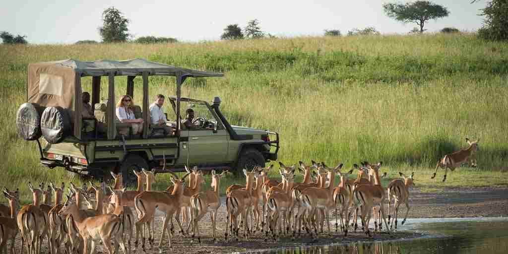 dunia-camp-game-drive-tanzania-yellow-zebra-safaris.jpg