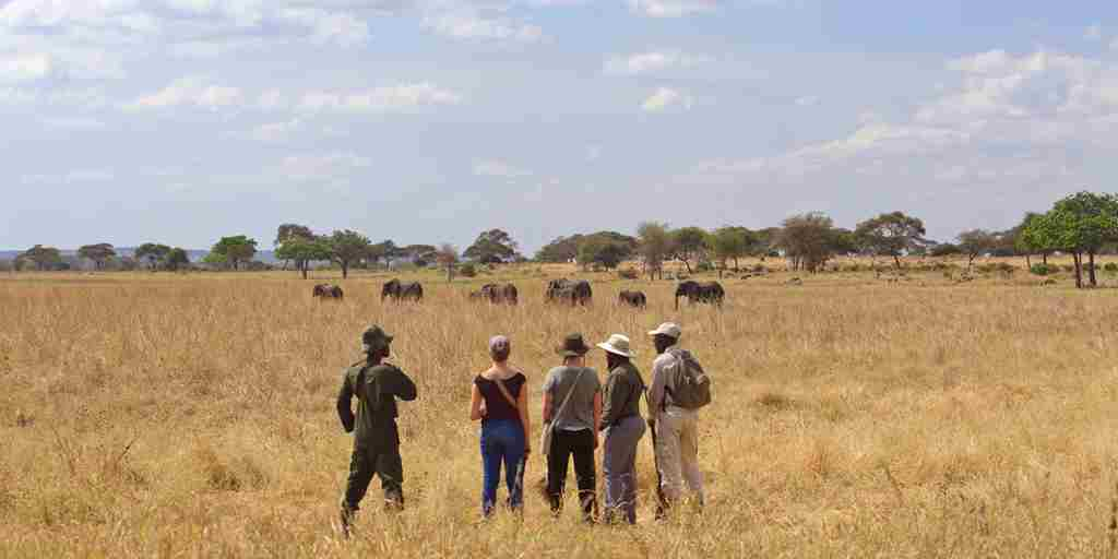 little-olivers-bush-walk-tanzania-yellow-zebra-safaris.jpg