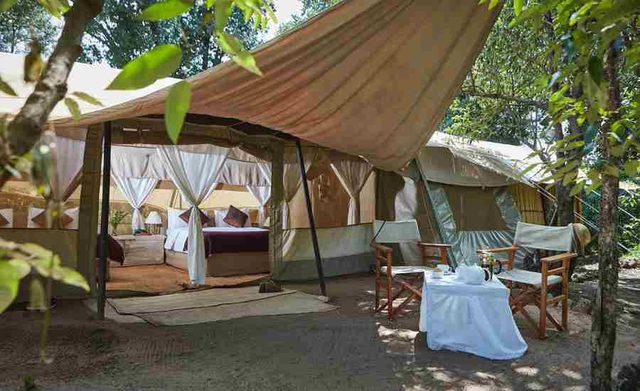spekes camp tent area kenya yellow zebra safaris