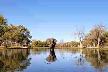5-elephant-botswana-client-review-yellow-zebra-safaris.jpg