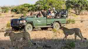 1.Truck client blog south africa safari yellow zebra safaris