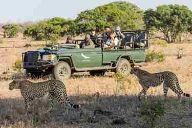1.Truck-client-blog-south-africa-safari-yellow-zebra-safaris.jpg