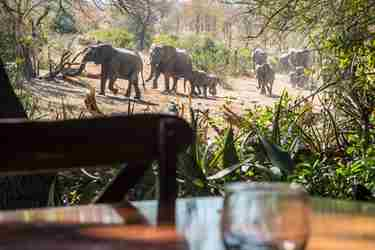 3.Elephants-from-lodge-client-blog-south-africa-safari-yellow-zebra-safaris.jpg