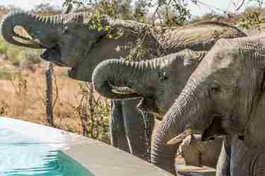 4. Elephants-drinking-from-pool-client-blog-south-africa-safari-yellow-zebra-safaris.jpg