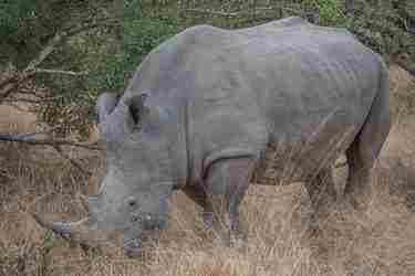 11.Rhino-client-blog-south-africa-safari-yellow-zebra-safaris.jpg