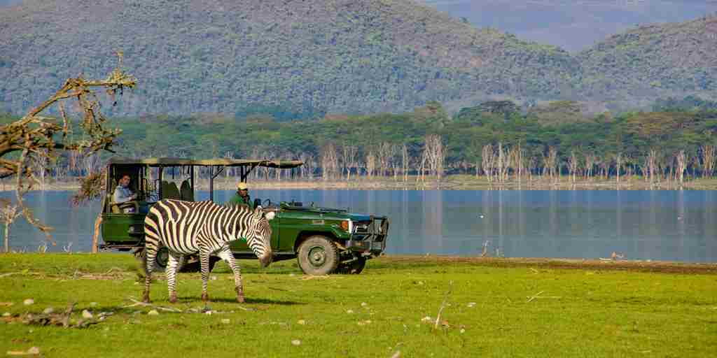 chui lodge game drive lake kenya yellow zebra safaris