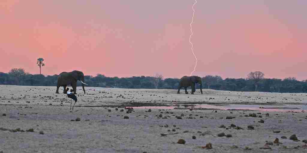 11. November in Zimbabwe 31-imvelo-safari-lodges-bomani-tented-lodge-first-rains-have-arrived-in-a-very-parched-hwange.jpg