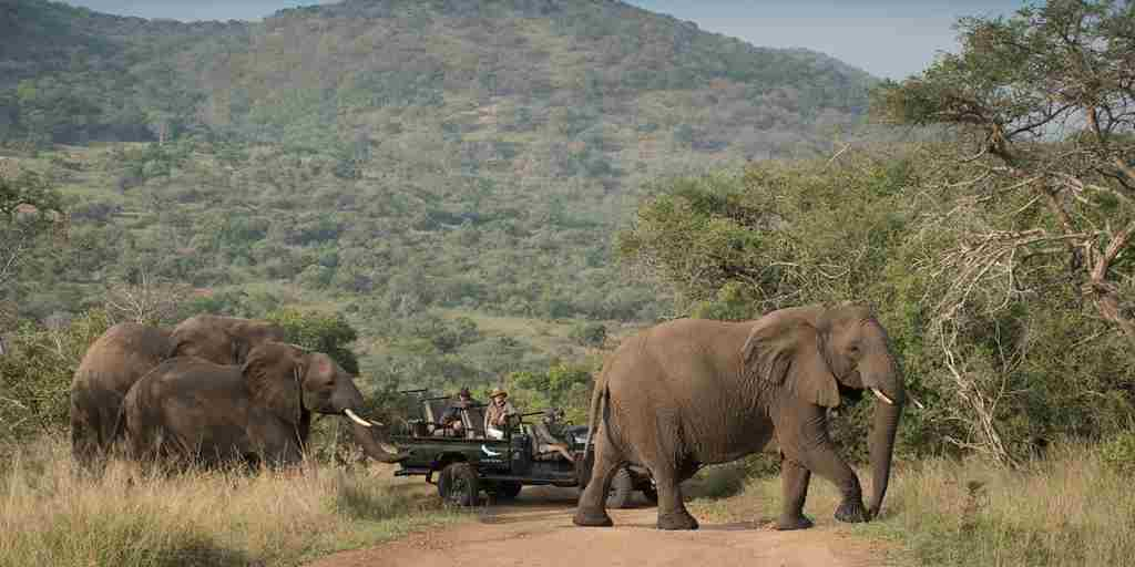 9. September game drives in phinda 11