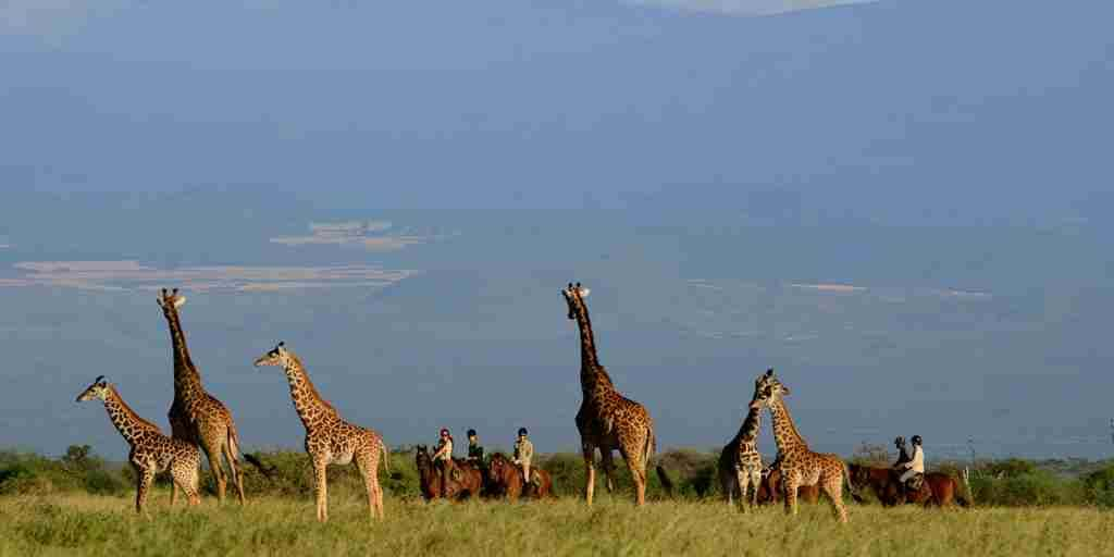lemala-villas-experiences-tanzania-yellow-zebra-safaris.JPG