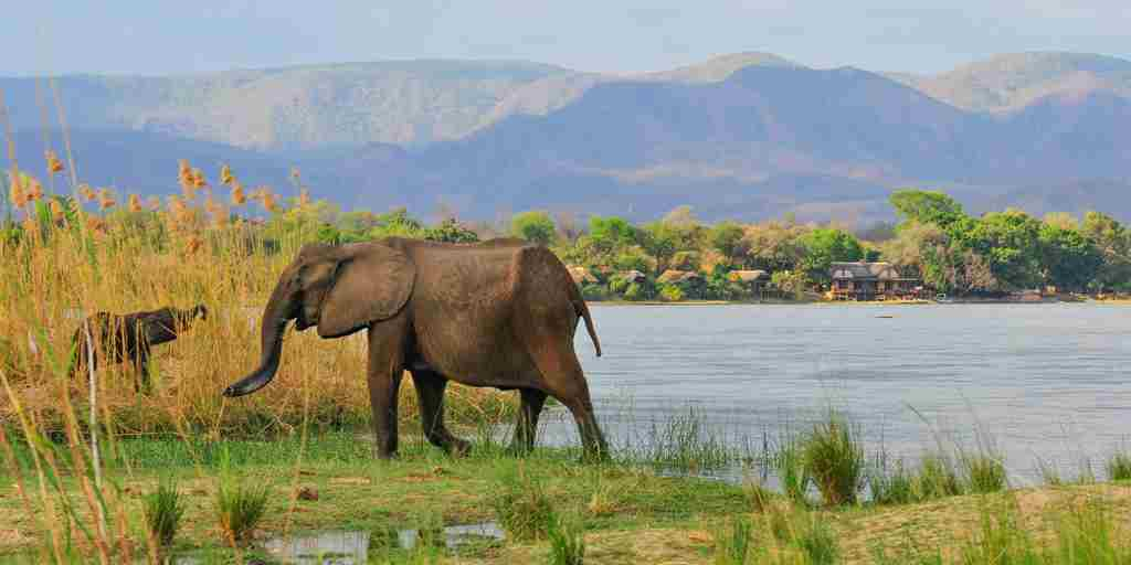 royal zambezi elephants zambia yellow zebra safaris