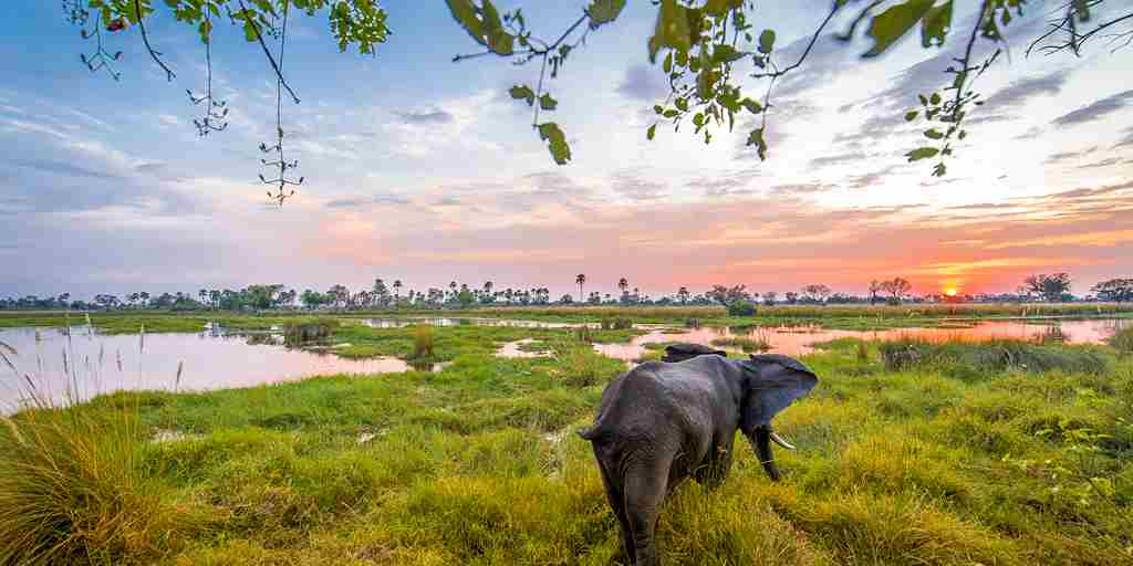 delta camp elephant sunset botswana yellow zebra safaris