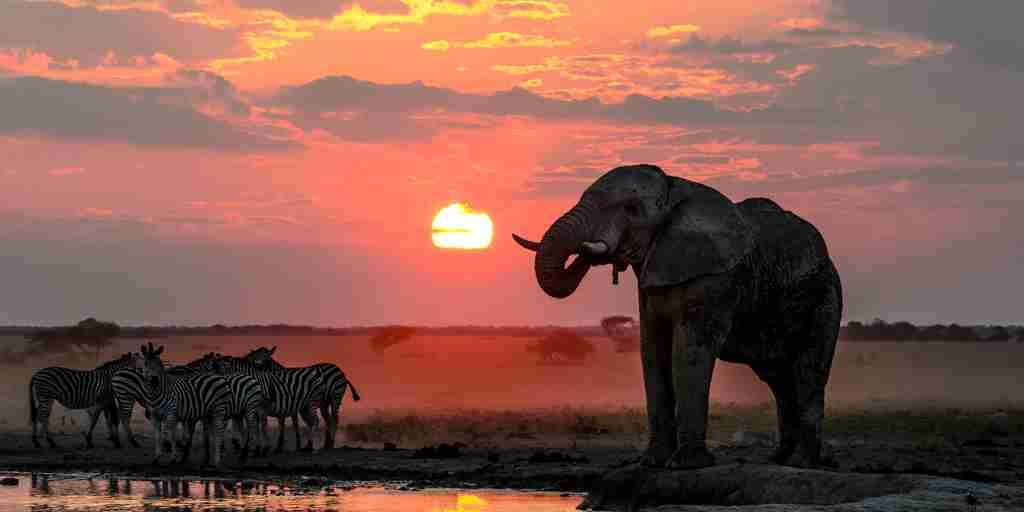 nxai-pan-sunset-botswana-yellow-zebra-safaris.jpg