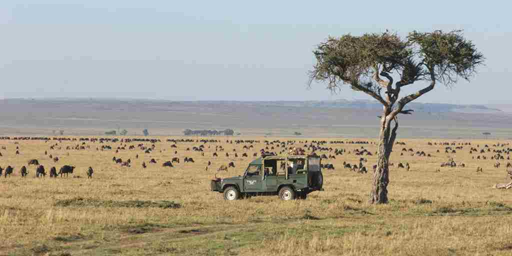 governors camp game bush drive kenya yellow zebra safaris