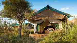 laikipia wilderness camp tent entrance kenya yellow zebra safaris