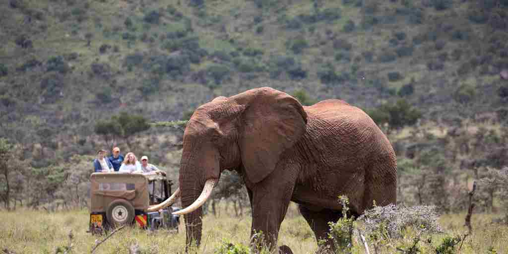 enasoit game drive elephant kenya yellow zebra safaris