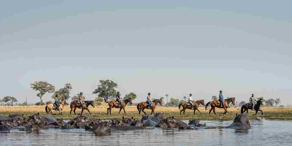okavango-horse-safaris-water-horse-land-botswana-yellow-zebra-safaris.jpg