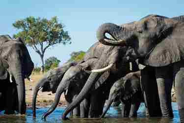 hwange zimbabwe top places to see elephants in africa yellow zebra safaris