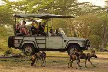 wild-dog-lake-manze-tented-camp-selous-yellow-zebra-safaris.jpg