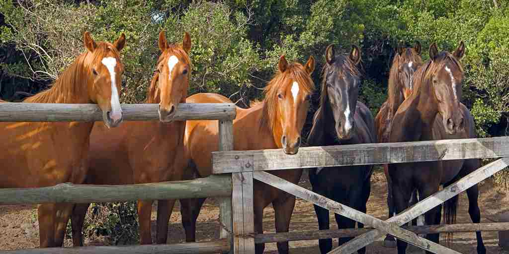 well-kept-horses-at-grootbos-stables.jpg