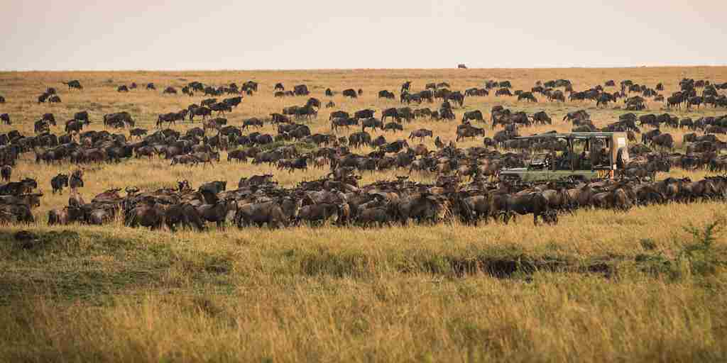 Kimondo Camp Wildebeest Migration Eliza Deacon HR