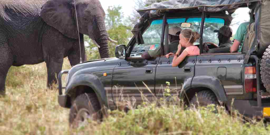 AWS Oct Elephant viewing from car.jpg
