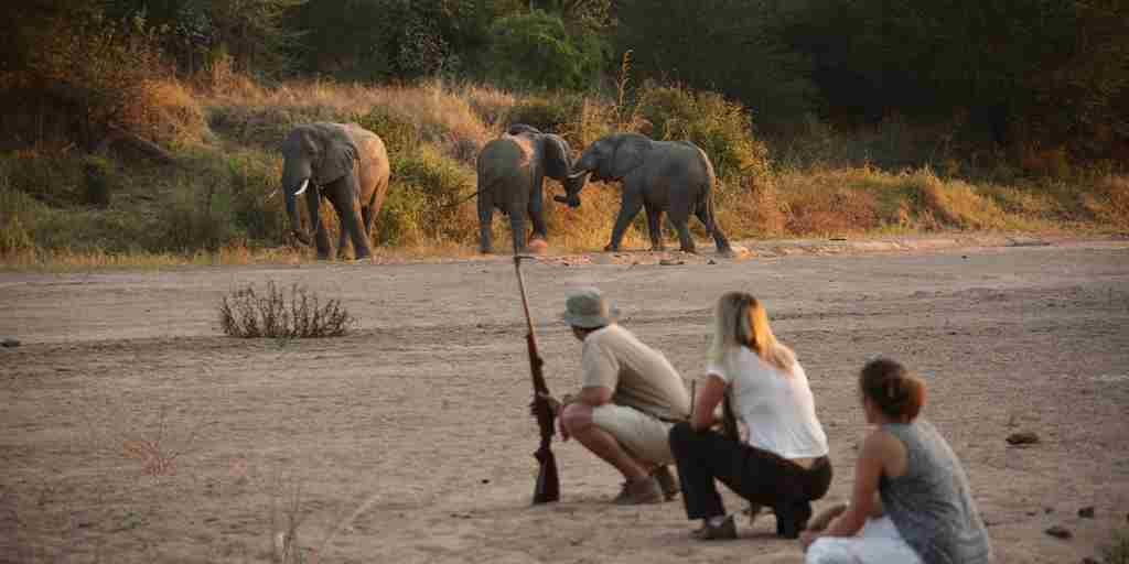 Get upclose and personal with walking safaris at Ruaha.jpg