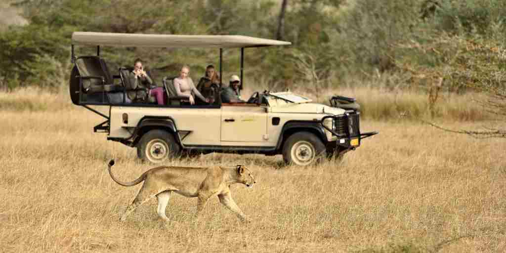 Azura Selous game drive- lioness.jpg